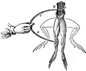 Skizze des Froschschenkel-Experiments