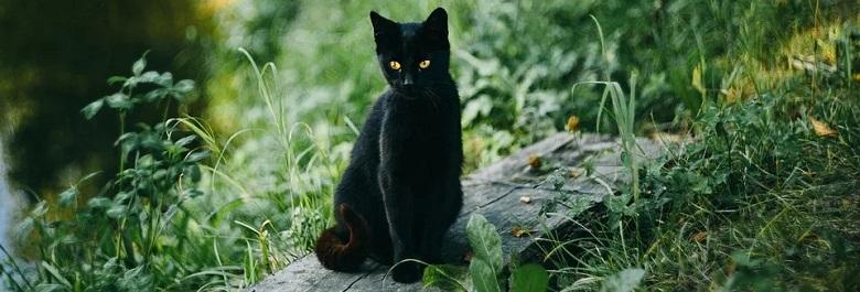 Die Schwarze Katze von Zwieselstein