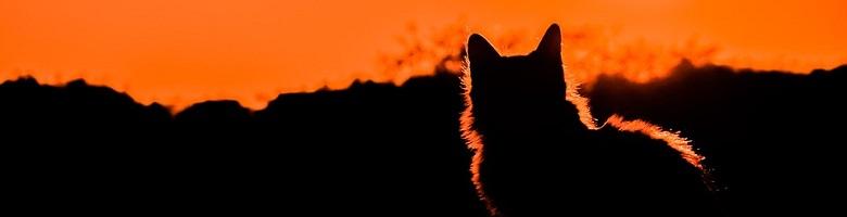 Die Katzen von Ulthar Header